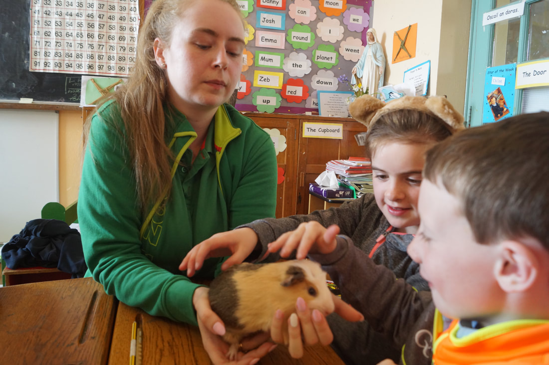 Emma From Maxi Zoo Visits Us Drinagh National School Spoke To The Children About Looking After Their Pets Showed Tom And Jerry Her Guinea Pigs